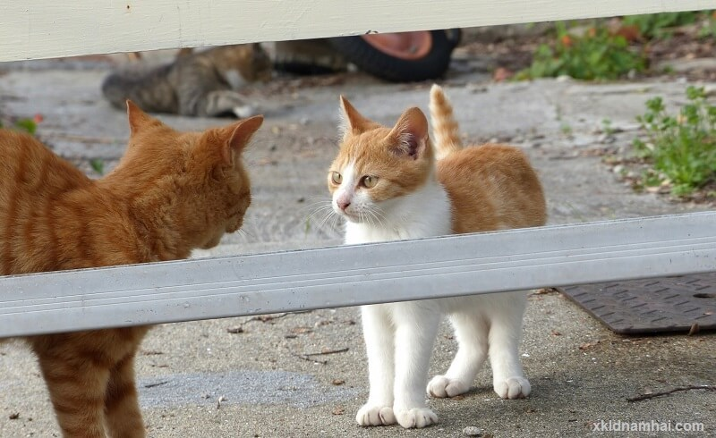 2 chú mèo tỉnh Kagawa
