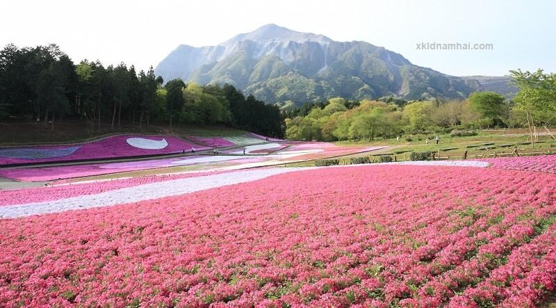 Công viên Hitsujiyama