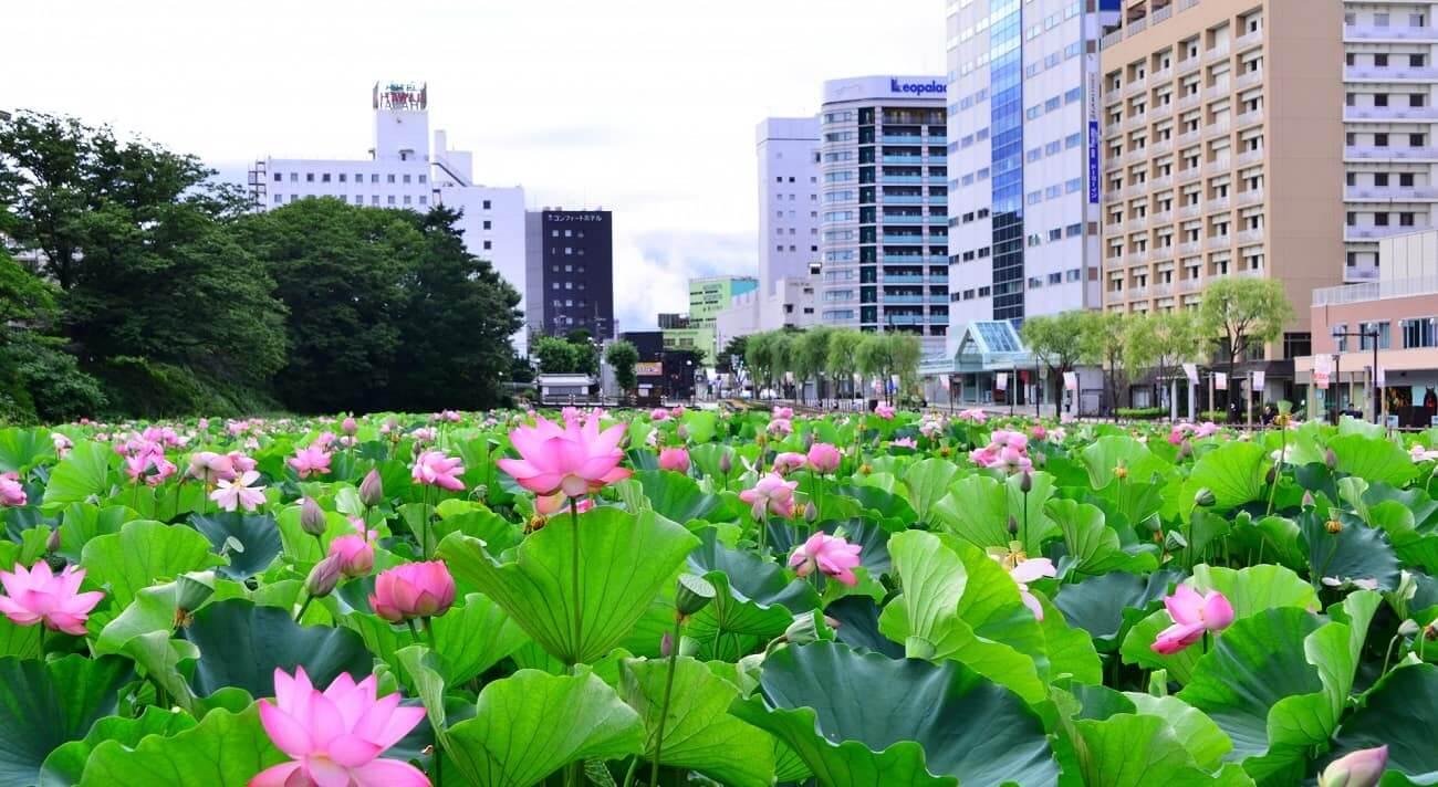 Mùa hè tỉnh Akita