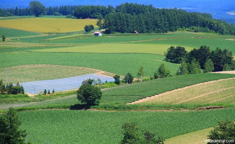 nông nghiệp đảo hokkaido