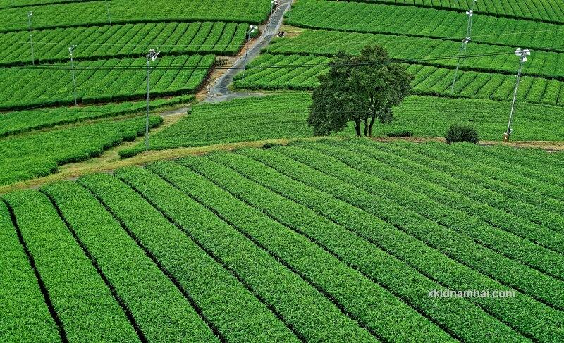 nông nghiệp tỉnh Fukuoka