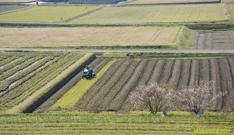 nông nghiệp tỉnh Kagawa