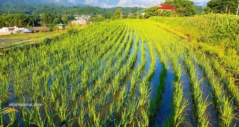 Nông nghiệp tỉnh Miyagi