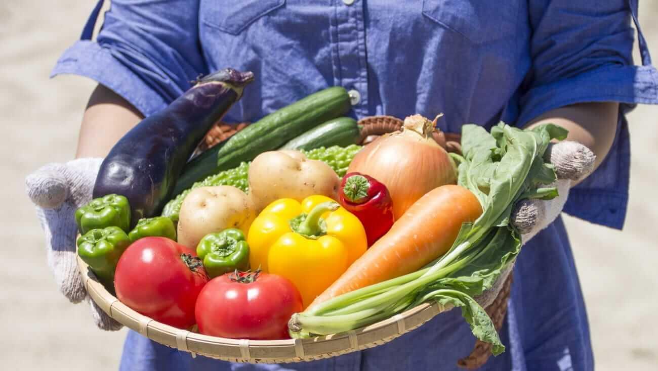 phát triển nông nghiệp tỉnh oita nhật bản