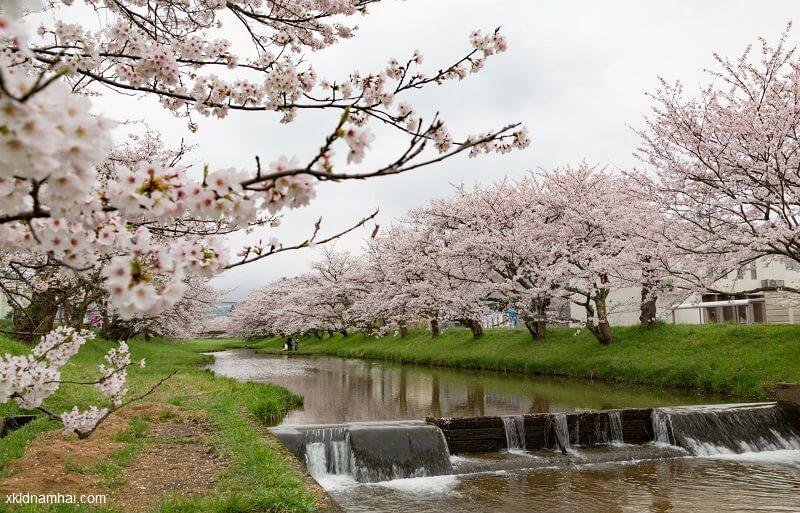 Khí hậu của tỉnh Shimane Nhật Bản