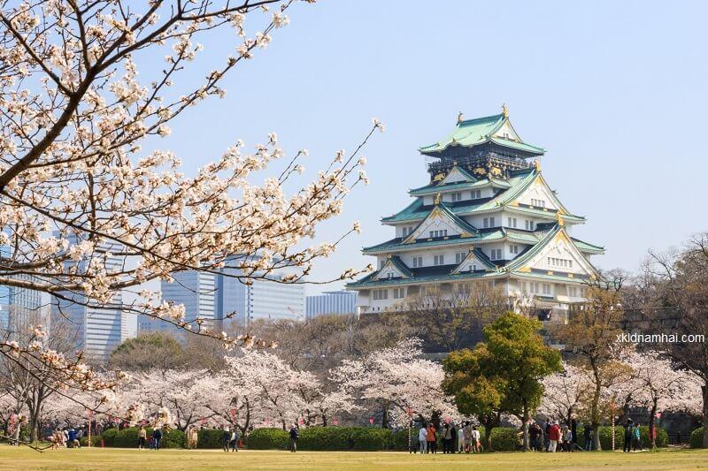 Lâu đài Osaka nhìn từ xa