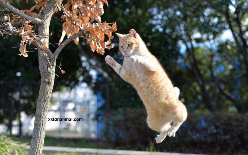 những chú mèo tinh nghịch tỉnh Hyogo
