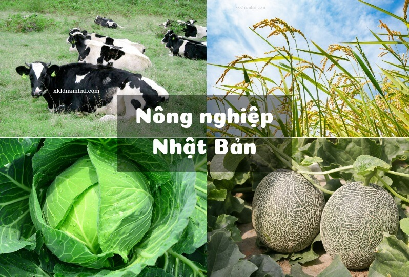 Nông nghiệp Nhật Bản