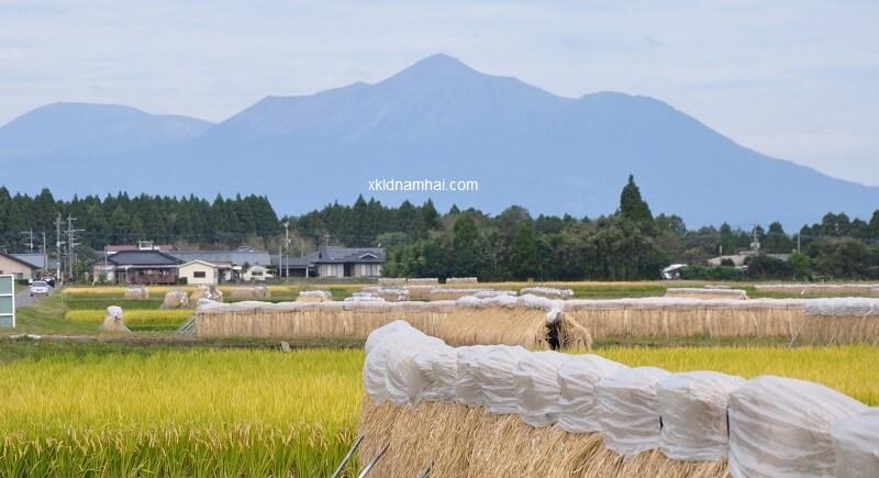 Nông nghiệp tỉnh Kagoshima