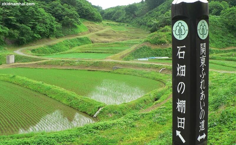 Nông nghiệp tỉnh Tochigi