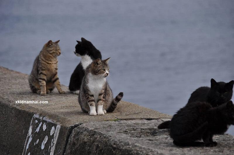 Đảo mèo Ainoshima