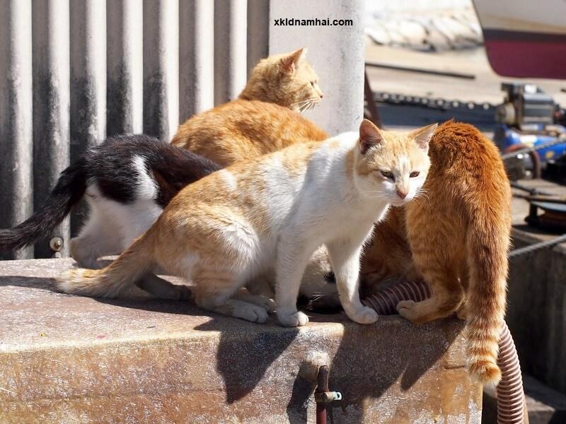 Đảo mèo Aoshima tỉnh Ehime