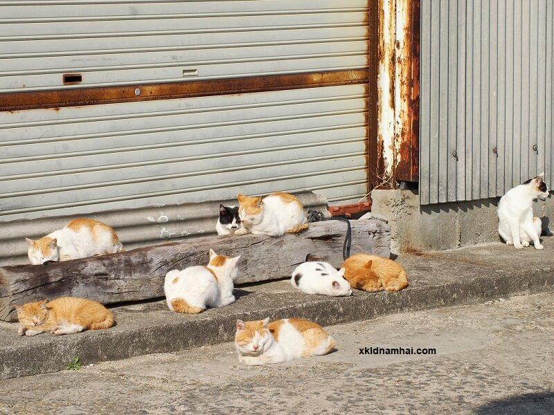 Đảo mèo Sanagijima