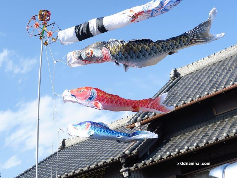 Treo cờ cá koi ở Nhật Bản