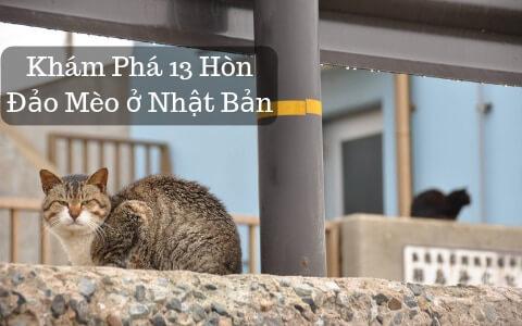 Khám Phá 13 Hòn Đảo Mèo ở Nhật Bản