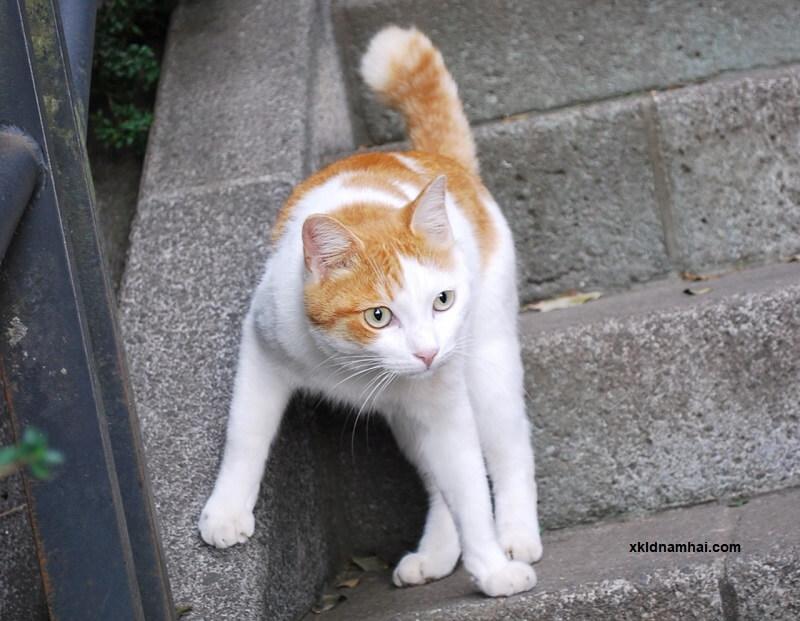 Đảo mèo Enoshima - tỉnh Kanagawa