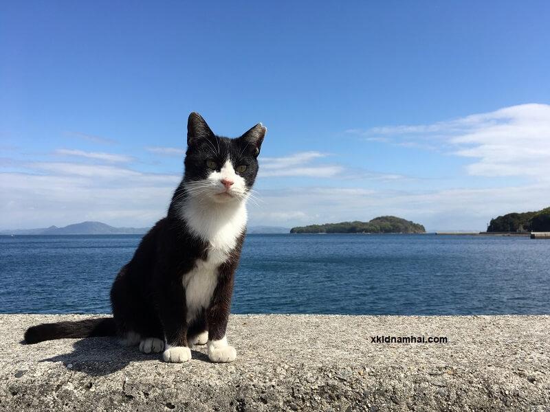 Đảo mèo Manabeshima - tỉnh Okayama