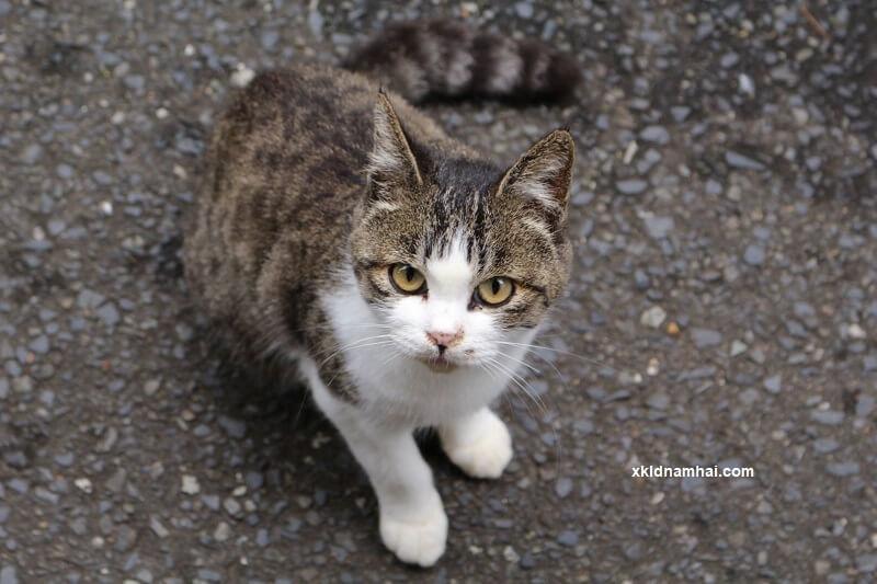 Tìm hiểu đảo mèo ở Nhật Bản